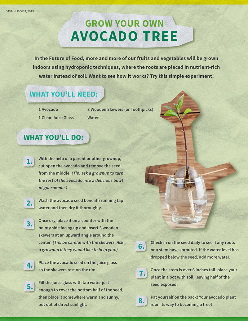 Download Instructions to grow your own avocado plant